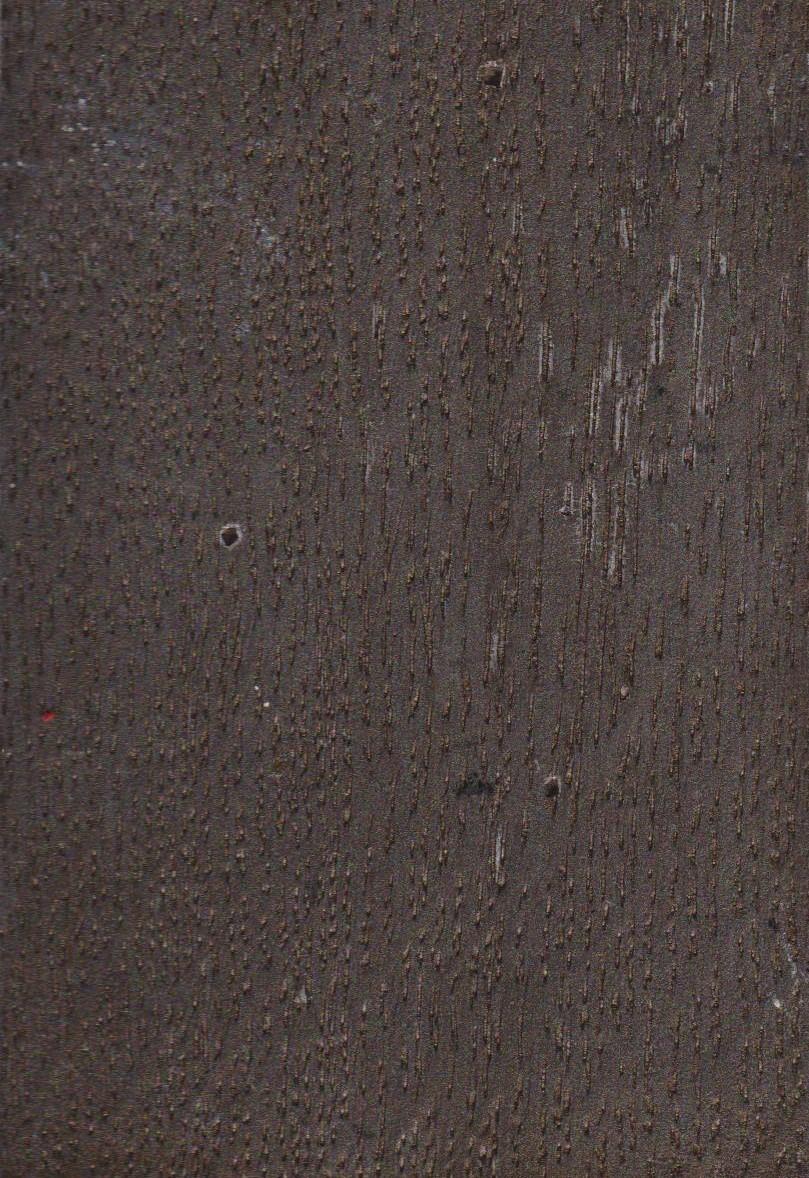 Chêne Noir Argenté